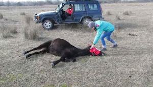 Manden hjælper hesten fri. Dyrets reaktion har fanget internetbrugers hjerter ov