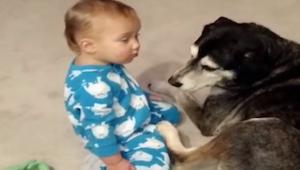 Drengen forsøger at kramme hunden, men er meget træt. Det er så sødt!