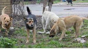 En lærer var på vej hjem, da han bemærkede nogle hunde opføre sig mærkeligt...