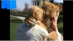 Kvinden tog sig af de små løver, men blev senere nødt til at overdrage dem til Z