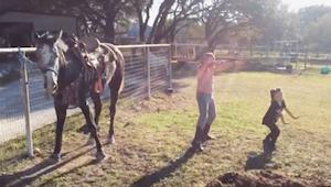 To piger begynder at danse; tag imidlertid ikke øjnene fra hesten, som overskygg