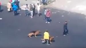 En mand kastede en mursten efter hundene ... Heldigvis fik karma ham - hurtigt!