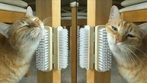 Din kat ved at dø af kedsomhed? Så har vi 9 tricks til dig!