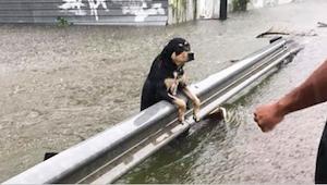 Under en voldsom storm forlod ejerne deres hunde til den visse død. Disse billed