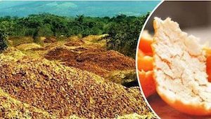 De smed tusindvis af tons appelsinskaller ud. 16 år senere er verden forbavset o