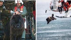 Hunden kastes i det iskolde vand fra helikopteren for at redde folk fra at drukn