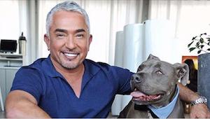 Hvorfor råber Cesar Millan aldrig på sine hunde? Se hvad hunde eksperten anbefal