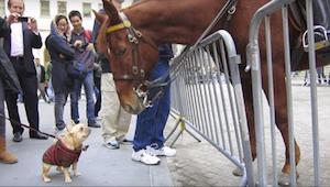En hund blev super glad, da en hest endelig gav den opmærksomhed - du skal se de