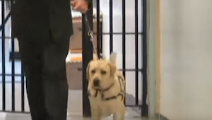 Soldaten tager hunden med i fængslet. Se hvordan dyret reagerer, når det ser den