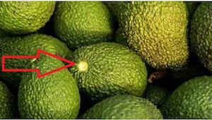 Et velfungerende trick, der får avocadoen til at blive moden på 10 minutter! Hvo