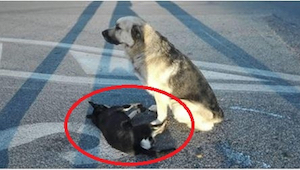Venskabet mellem disse to hunde har rørt tusindvis af mennesker over hele verden