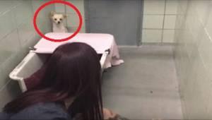 Den rædselsslagne hund gemmer sig i hjørnet, men da den ser, hvad den frivillige