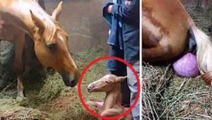 De løb til stallen for at hjælpe hesten med at føde. Hvad de så overraskede dem!
