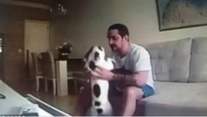 Siden hendes kæreste flyttede ind hos hende, var hendes hunde begyndt at opføre
