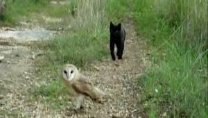 Katten nærmer sig uglen. Det, som den gør om et lille øjeblik, har overrasket mi