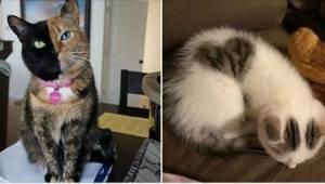15 katte som ser ret anderledes ud!