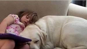 Hun ringede til sin 4-årige datters lærer, fordi hun så, at hendes hund pludseli