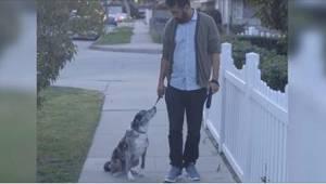 Manden tog en gammel, forladt hund til sig. En dag under spadsereturen holdt hun