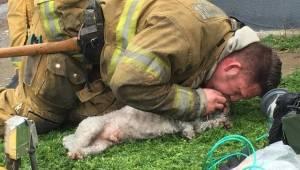 Brandmanden bar den livløse hund ud af det brændende hus. Et øjeblik senere græd