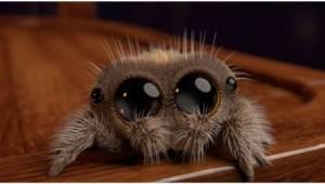 Hvis du er bange for edderkopper ... så se denne video!