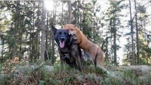 Hans hund forsvandt hver dag ind i skoven. Da dens ejer til sidst opdagede, hvem