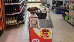 Chefen i supermarkedet fik nok af synet af hunde, som var lukket inde i biler, s