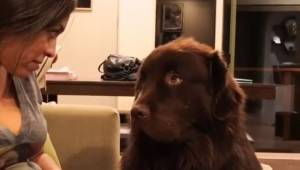 Hundens ejer gav sin fornærmede hund en undskyldning. Det, som hunden gjorde, er