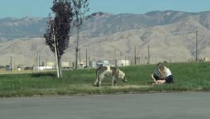 Frivillige blev kaldt ud til en hjemløs hund. De troede ikke, den ville være så