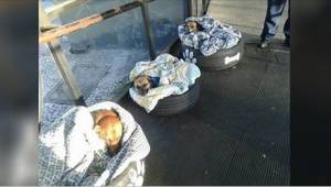 Rutebilstationen åbnede sine døre for herreløse hunde. Se deres reaktion, da de