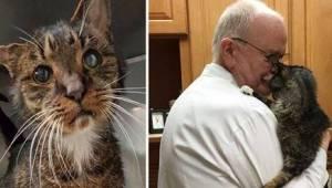 En hjemløs gamel kat kom endelig under pleje af en dyrlæge. Det ændrede hele den