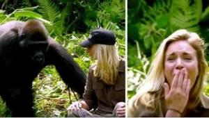 Han reddede livet for to gorillaer, og 6 år senere tog han hen for at besøge dem
