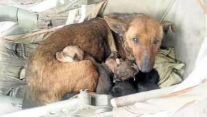 Den herreløse tævehund tog sig af en afvist nyfødt menneskeunge - hunde har mere