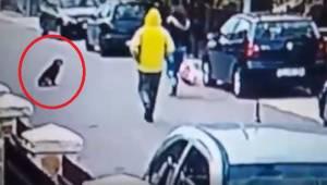 Den mistænkelige mand angreb kvinden bagfra. Optagelsen, som viser, hvordan hun