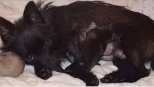 Hunden blev efterladt i kulden. Heldigvis hjalp nogen den, og takket være det op