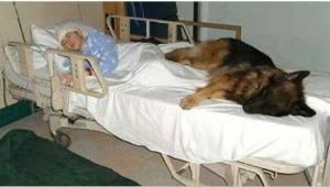 Inden hun døde skrev hun et bevægende brev på vegne af sin hund. Da hundens nye