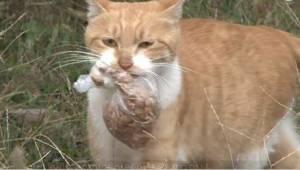 En hjemløs kat ville ikke tage imod maden, medmindre den var pakket ind. En dag