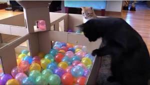 Hvis du vil gøre katten glad, giv det her til den! Se den reaktion!