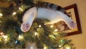 De der katte ved ikke, at der er forbud mod at nærme sig juletræet! Se denne pra