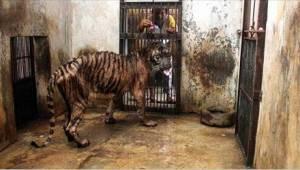 Dødens zoologiske have – her efterlades dyrene til en ubønhørlig sultedød!