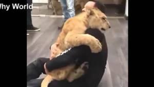 Kun dyr kan elske på denne måde! Se den usædvanligt søde optagelse.