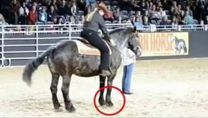 Hesten hørte sin yndlingsmelodi, og nogle sekunder senere måtte mængden gnide øj