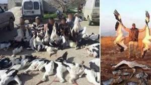 Krybskytter fra Syrien og Libanon jager storke med stor begejstring. Der er mind