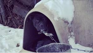 De frivillige medarbejdere fik tårer i øjnene, da de så denne hund ... Og dens e