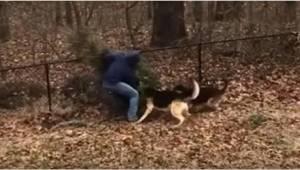 De her hunde vil bare ikke at deres ejer skal smide juletræet ud. De gør alt for