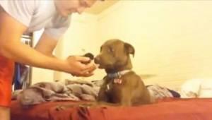 Den måde denne pitbull reagerede på ved synes af en lille kat, er dybt rørende!