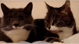 Ejeren indspillede to katte liggende på sengen, mens de har en større diskution.