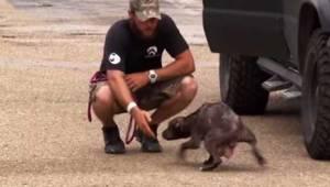 Tævehunden havde sin egen metode til at bede redningsfolkene om at finde hendes