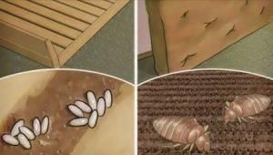 Vil du gerne være fri for at mider behersker din seng? Så hold op med at gøre DE
