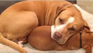 BHan tog hen til dyreinternatet efter en pitbull, men denne ville ikke forlade b