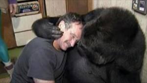 Gorillaen som hedder Koko krævede en smule ømhed fra Robin Williams. Se hvad der